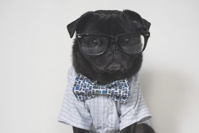 How Owning a Pug has Changed My Life | www.thepugdiary.com