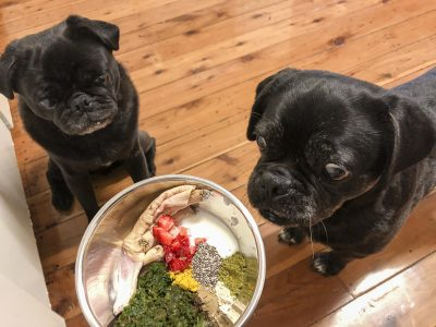 How to Feed Vegetables to Your Pug | www.thepugdiary.com