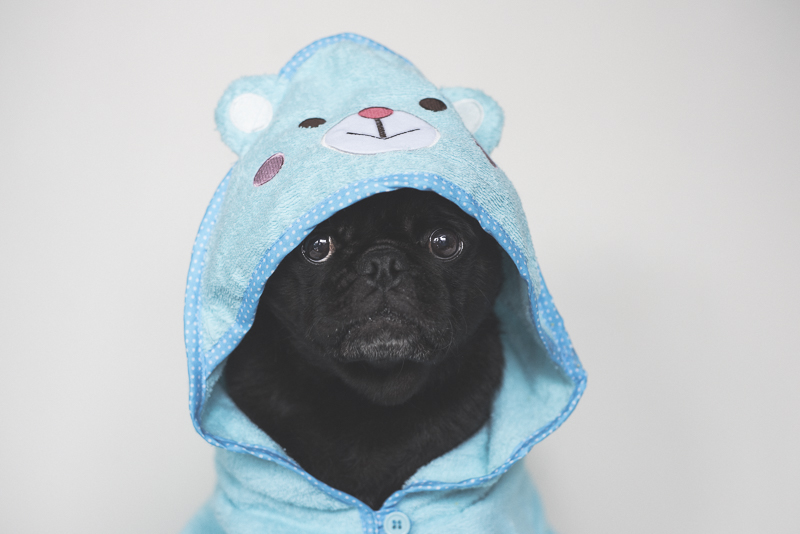 How to Make Your Dog InstaFamous | www.thepugdiary.com
