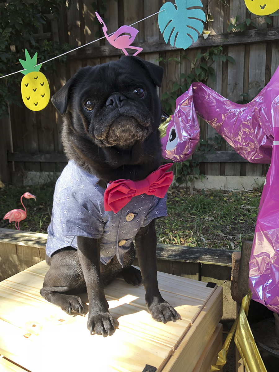 How to Theme a Pug Party | www.thepugdiary.com