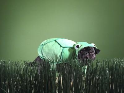 Stinkle's Social Pug Profile | www.thepugdiary.com