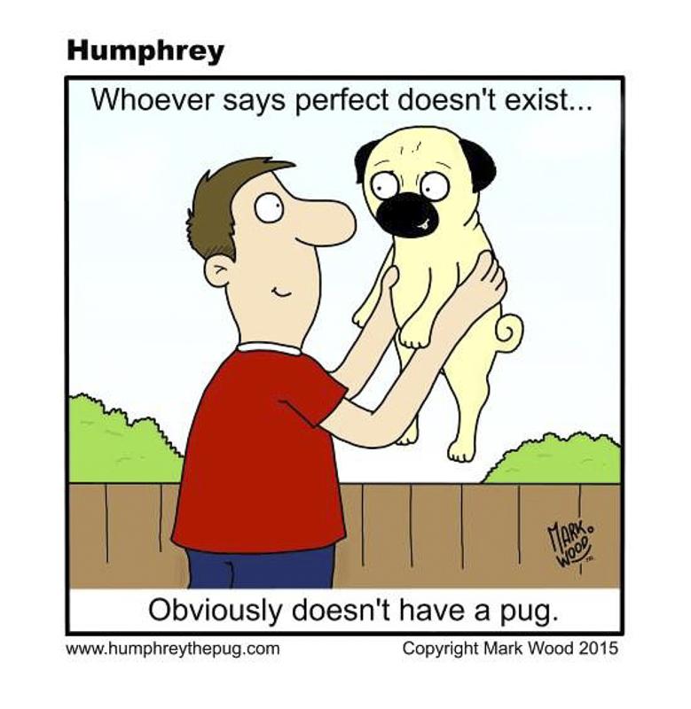 Humphrey's Social Pug Profile | www.thepugdiary.com