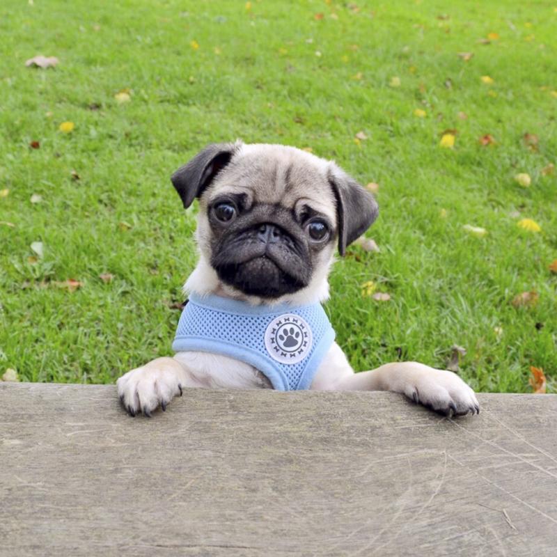 Jasmine's Pug Parent Profile | www.thepugdiary.com