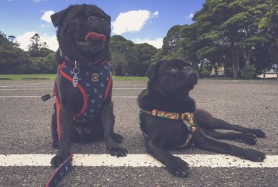 The Campaign to Keep Australia Pet Friendly | www.thepugdiary.com