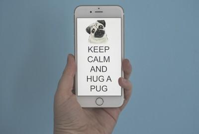 Keep Calm and Hug a Pug Phone Wallpaper | www.thepugdiary.com