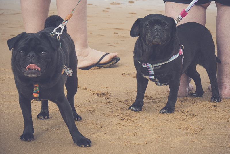 Pet Friendly Accommodation | Life of Riley & Darcey, Culburra Beach | www.thepugdiary.com