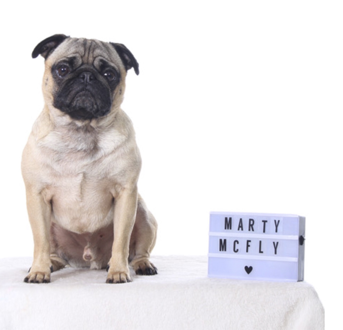 Marty McFly Social Pug Profile | www.thepugdiary.com