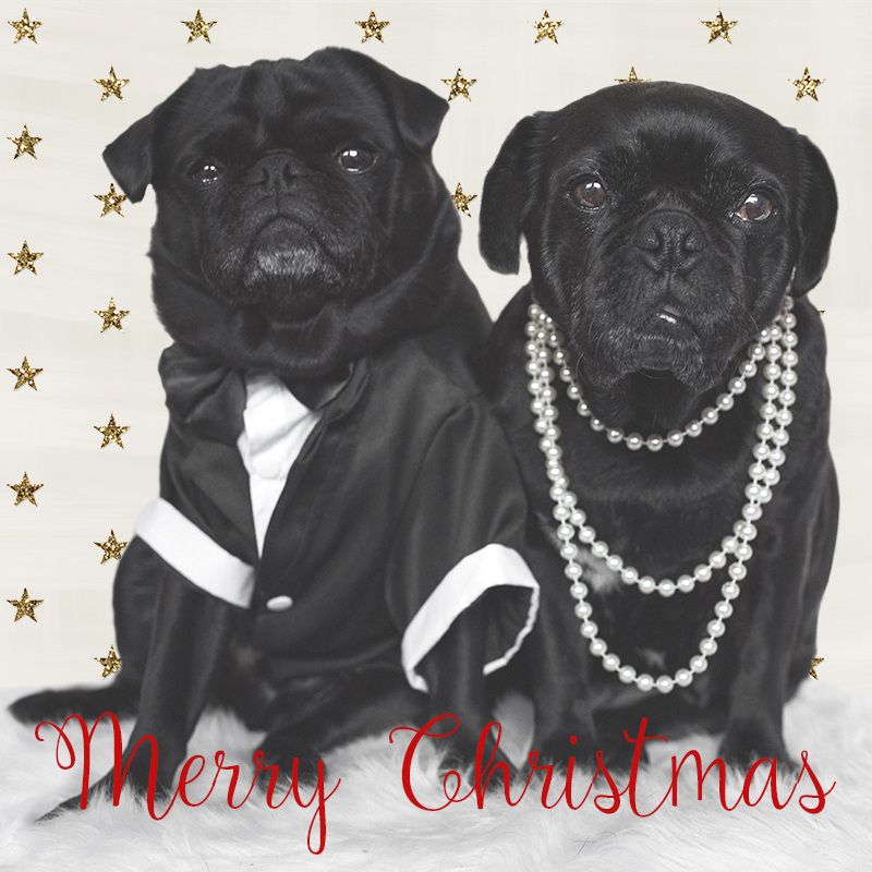 Merry Christmas from The Pug Diary | www.thepugdiary.com