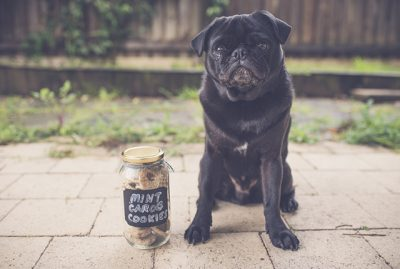 Mint Carob Cookie Dog Treat Recipe | www.thepugdiary.com
