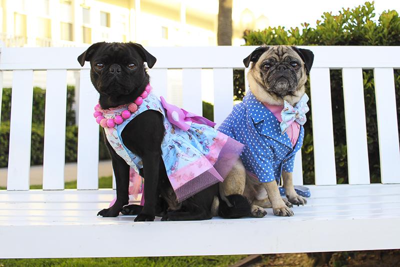 Nadia's Pug Parent Profile | www.thepugdiary.com