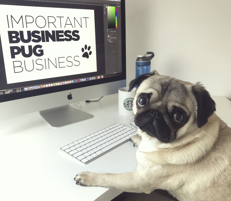 Paul's Pug Parent Profile | www.thepugdiary.com
