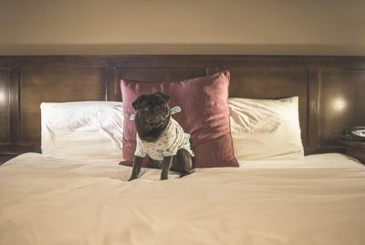 Pet Friendly Accommodation | Mercure Hotel Canberra | www.thepugdiary.com