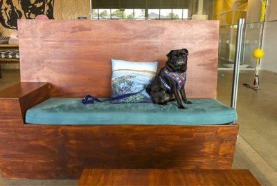 Pet Friendly Cafe | Maggie's Dog Cafe, Coffs Harbour | www.thepugdiary.com