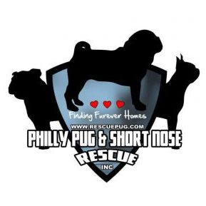 Philly Pug & Short Nose Rescue | www.thepugdiary.com
