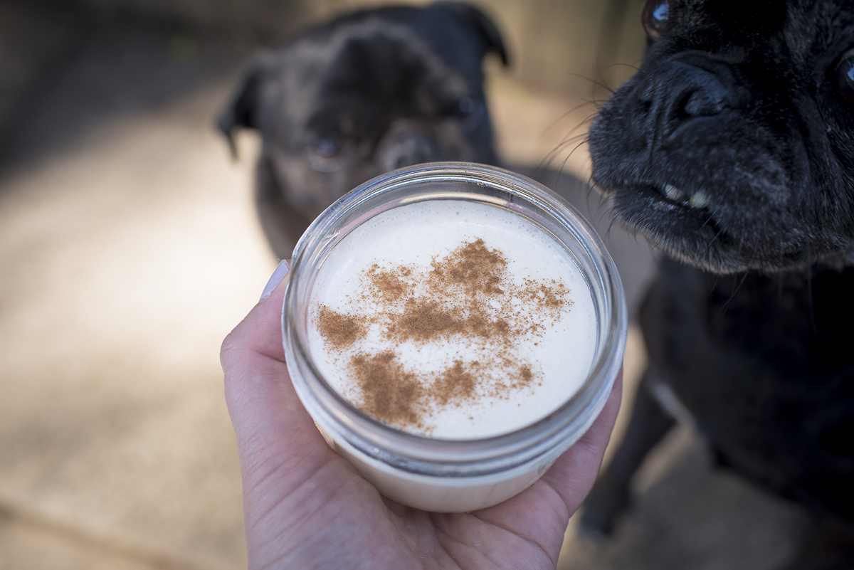 Pina Colada Smoothie Dog Treat Recipe | www.thepugdiary.com