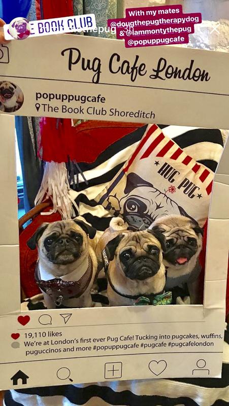Pop Up Pug Cafe London | www.thepugdiary.com
