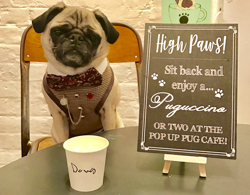 Pop Up Pug Cafe London | www.thepugdiary.com