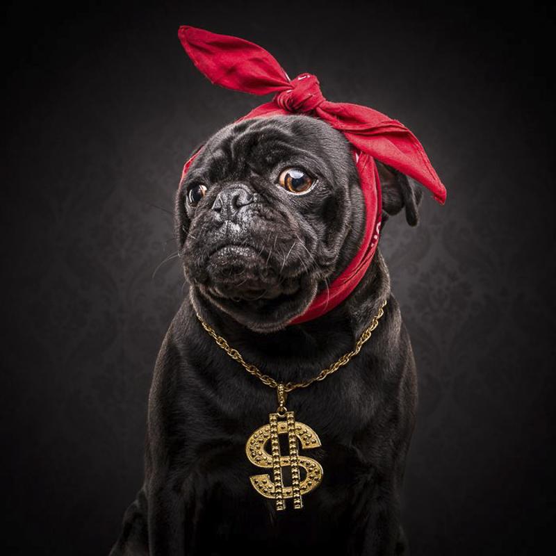 Sergio's Social Pug Profile | www.thepugdiary.com