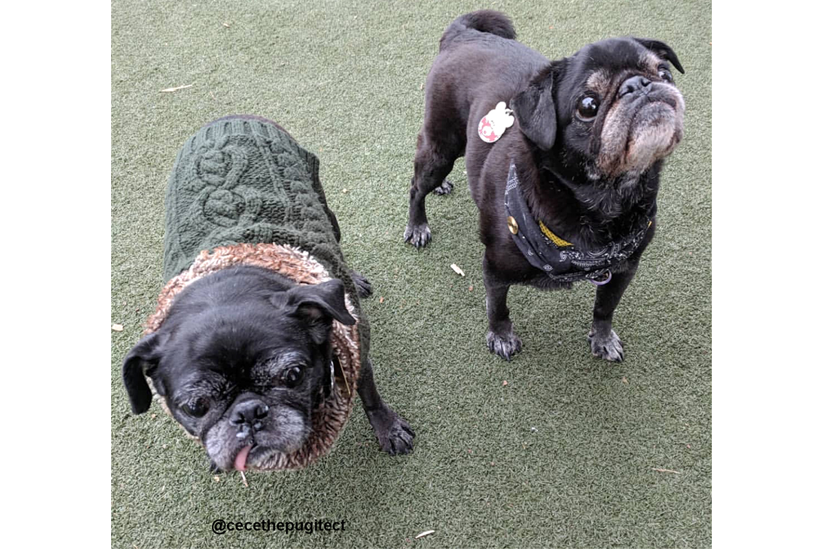 #PugsTakePhilly 2018 in Review | www.thepugdiary.com