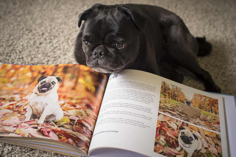 Review: Pugs of Perth Coffee Table Book | www.thepugdiary.com