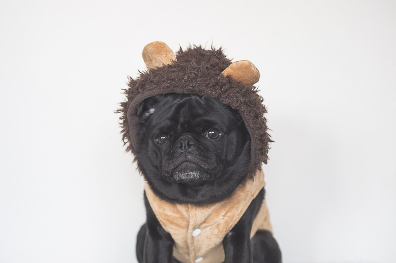 30 Pet Days to Put in Your Calendar This Year | www.thepugdiary.com