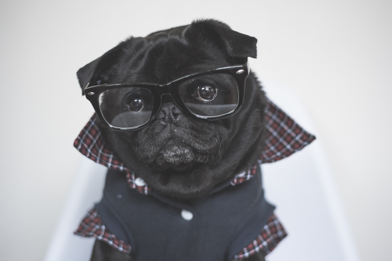 Ref_the_Pug_by_Kristy_Beck_12092015_0051
