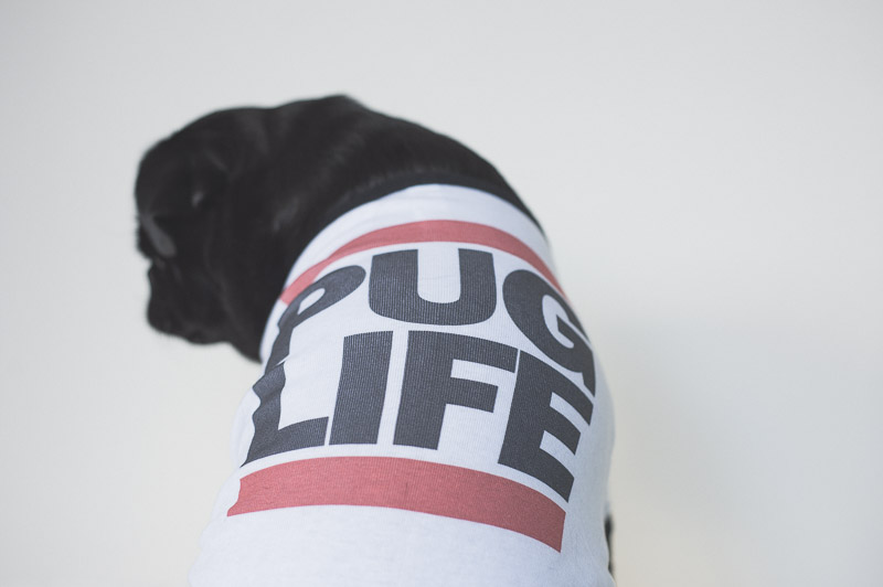Pug Life by Pet Threads Review | www.thepugdiary.com
