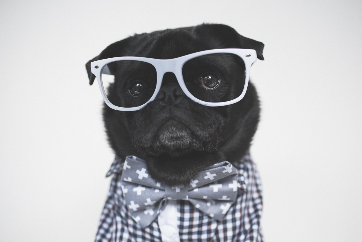 Social Pug Profile Submissions | www.thepugdiary.com