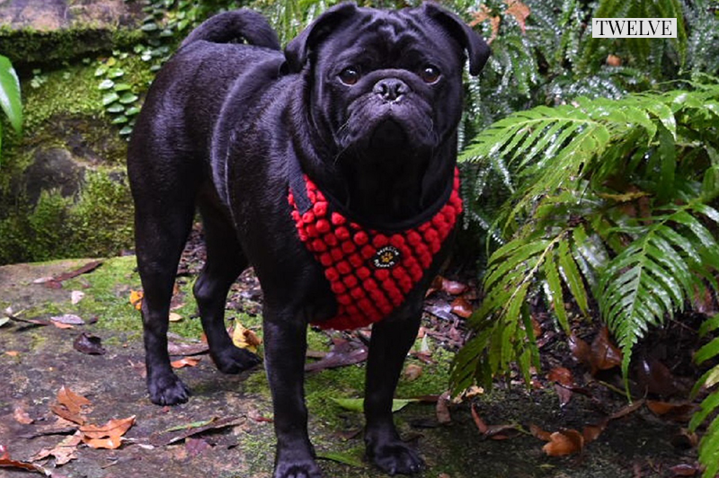2016 Holiday Gift Guide: For The Festive Pug | www.thepugdiary.com