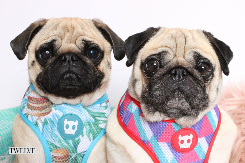 2016 Holiday Gift Guide: For The Fun Pug