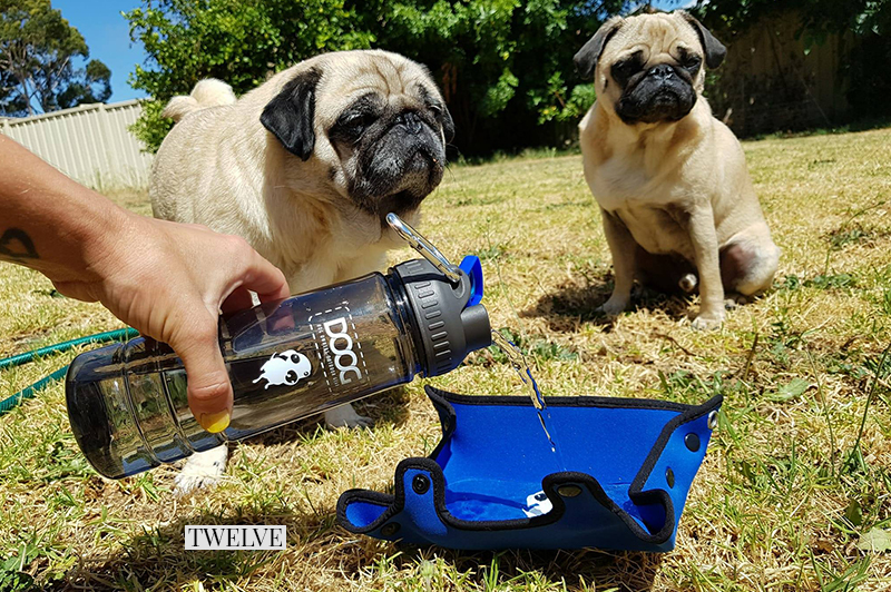 2017 Holiday Gift Guide for Pugs: The Adventurer | www.thepugdiary.com
