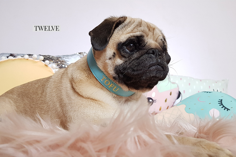 2017 Holiday Gift Guide for Pugs: The Fashionista | www.thepugdiary.com