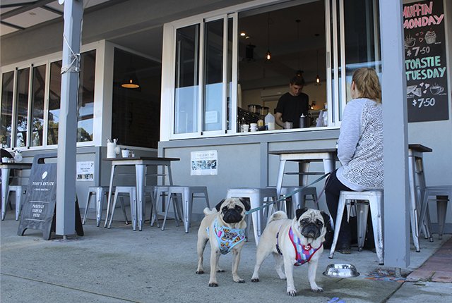 Top 10 Dog Friendly Places to Visit: Perth, Australia | www.thepugdiary.com