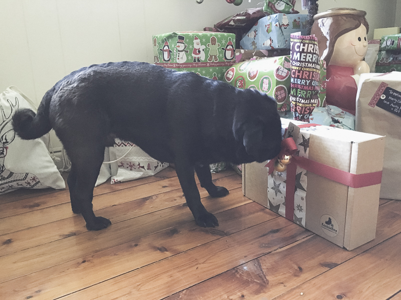 Top 5 Pug Safety Tips for the Holidays | www.thepugdiary.com