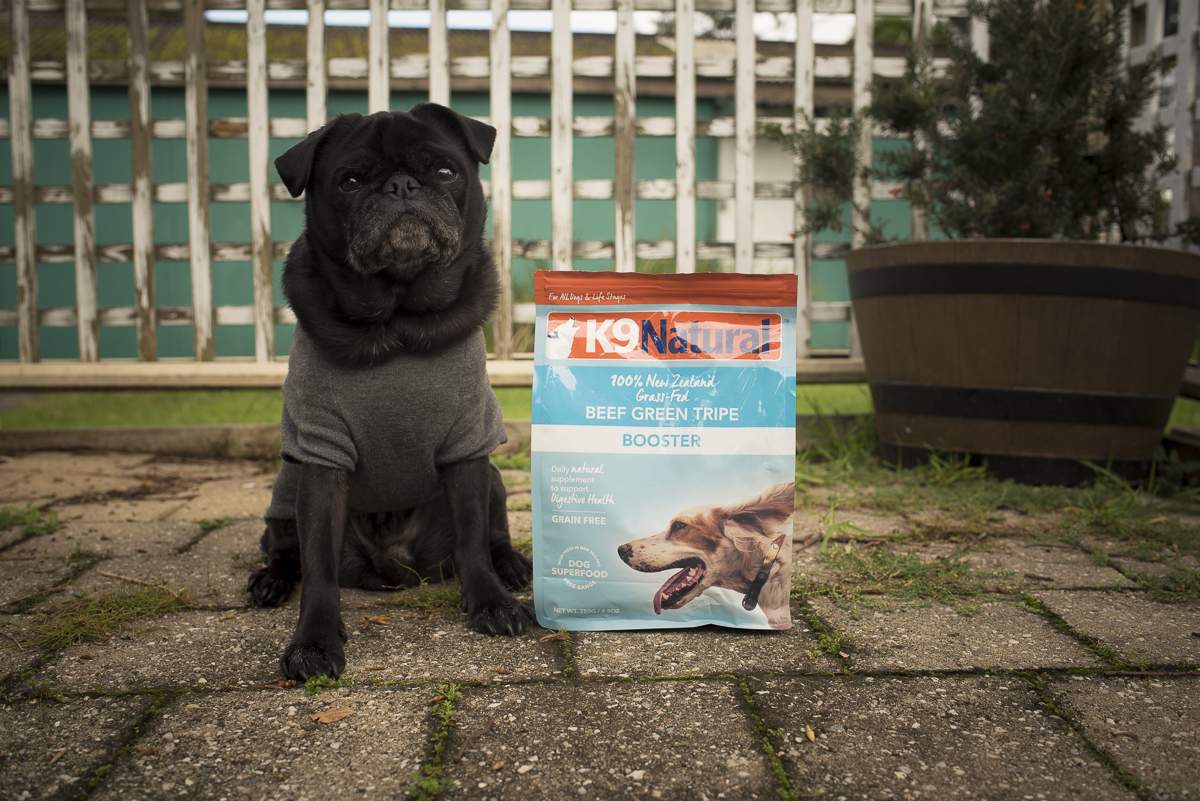 Travel Food Options for Raw Fed Pugs | www.thepugdiary.com