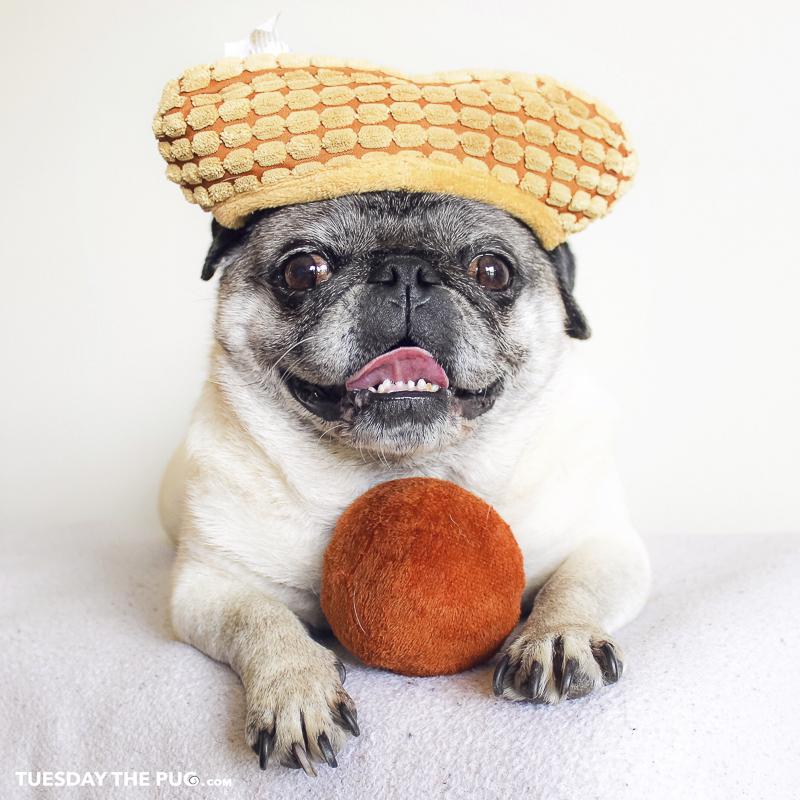 Tuesday's Social Pug Profile | www.thepugdiary.com