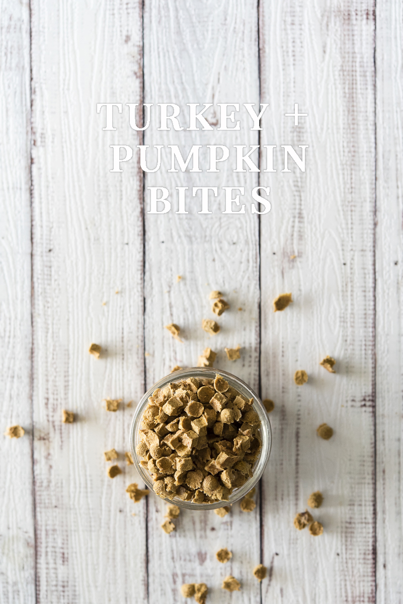 Turkey + Pumpkin Bites Dog Treat Recipe | www.thepugdiary.com