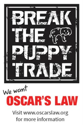 We Want Oscar's Law | www.thepugdiary.com