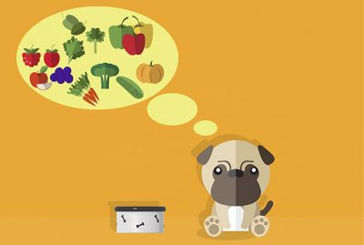 What Fruit & Vegetables to Add to Your Pug's Diet and Why | www.thepugdiary.com