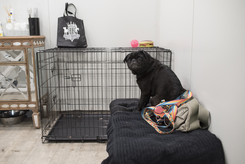 What to Expect When Taking Your Pug to a Groomer | www.thepugdiary.com