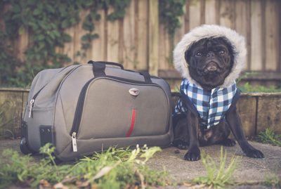 What to Pack for Your Dog When on Holiday | www.thepugdiary.com