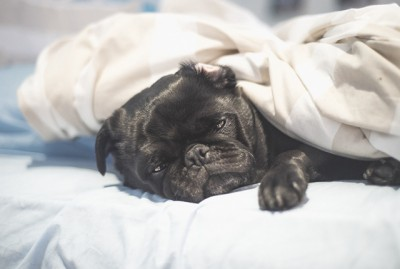 Where Pugs Sleep... There's No Right or Wrong | www.thepugdiary.com
