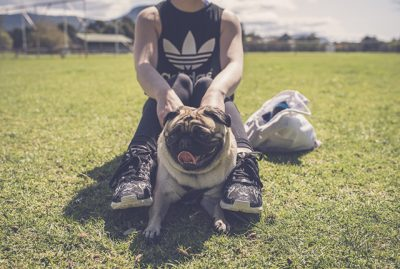 Why You Should Rescue a Pug or Pug Cross | www.thepugdiary.com