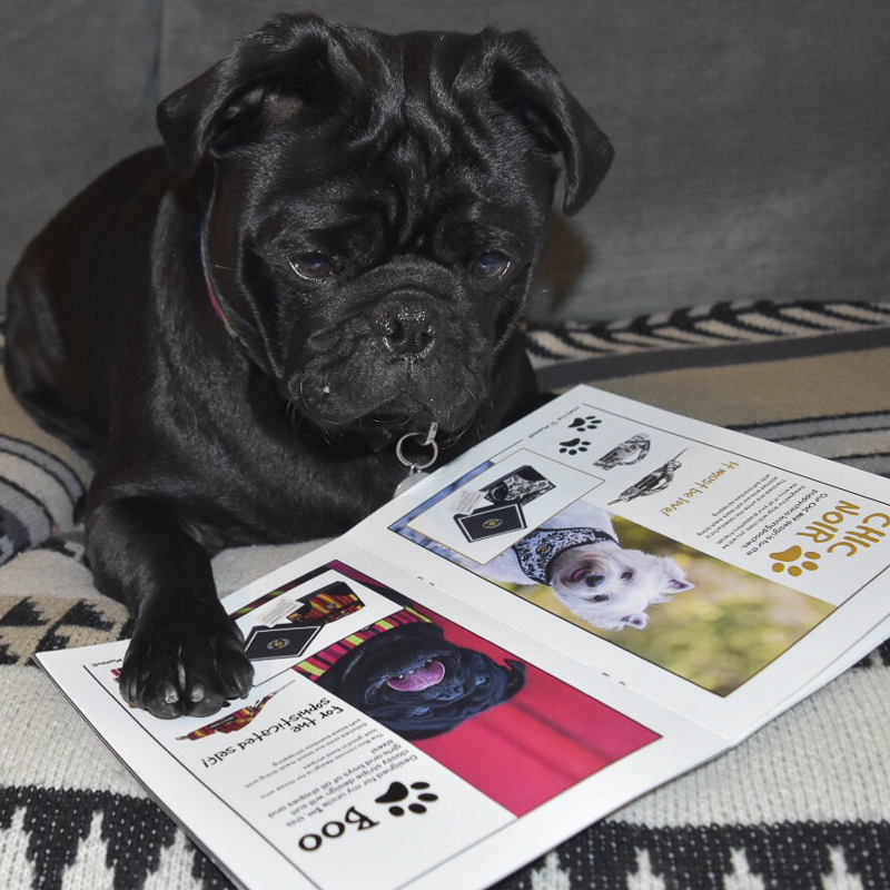 Winston's Social Pug Profile | www.thepugdiary.com
