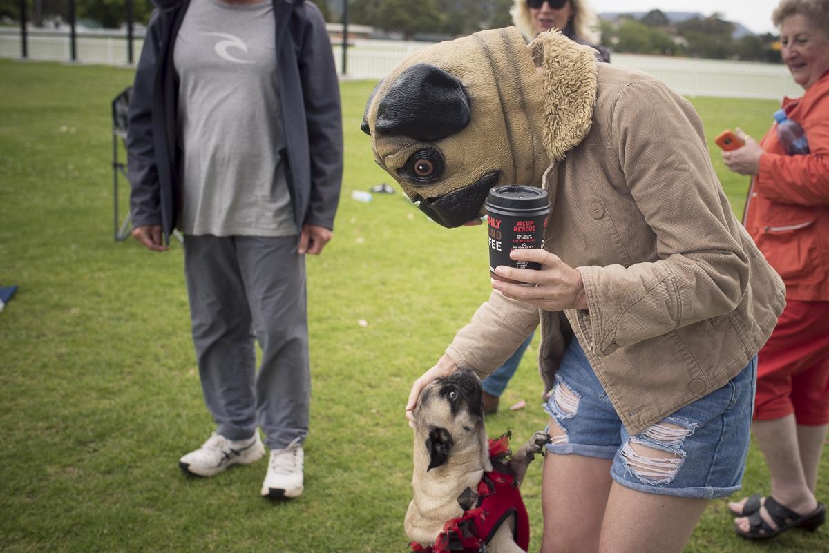 Wollongong Pugs Pugoween 2018 | www.thepugdiary.com