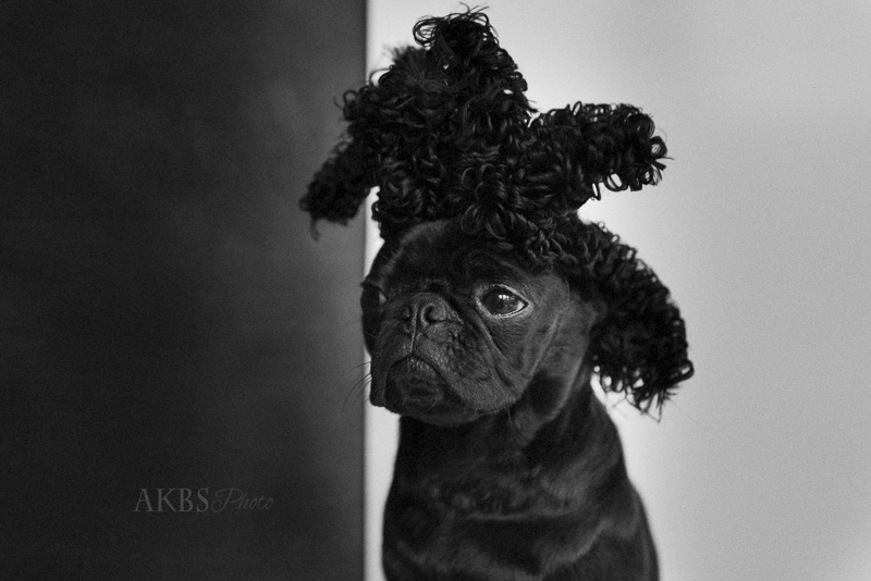 You Don't Know Stitch's Social Pug Profile | www.thepugdiary.com