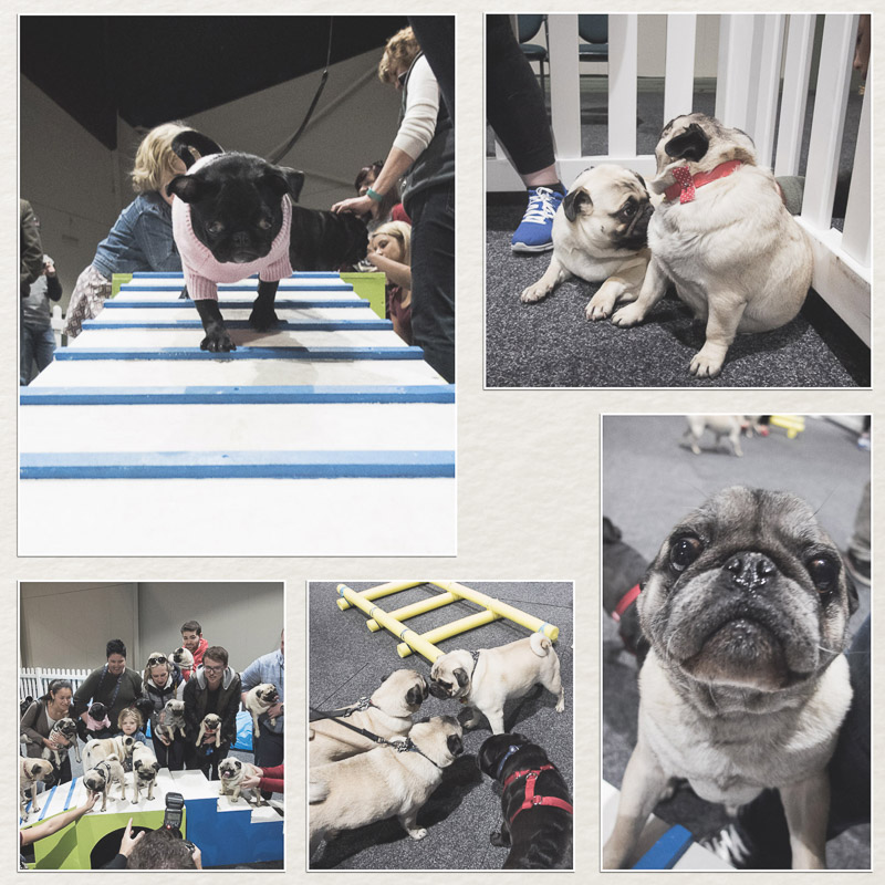 A Pooch Affair 2016 + Giveaway | www.thepugdiary.com