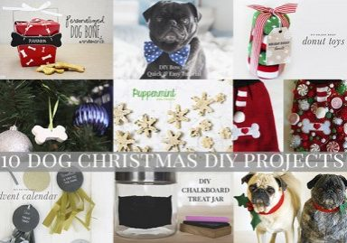 10 Dog Christmas DIY Projects | www.thepugdiary.com