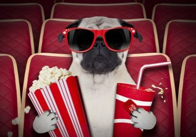 7 Movies to Watch Starring Pugs   www.thepugdiary