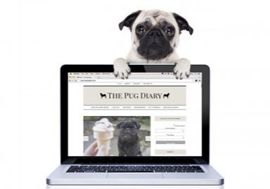 The Pug Diary's 2016 Annual Reader Survey | www.thepugdiary.com